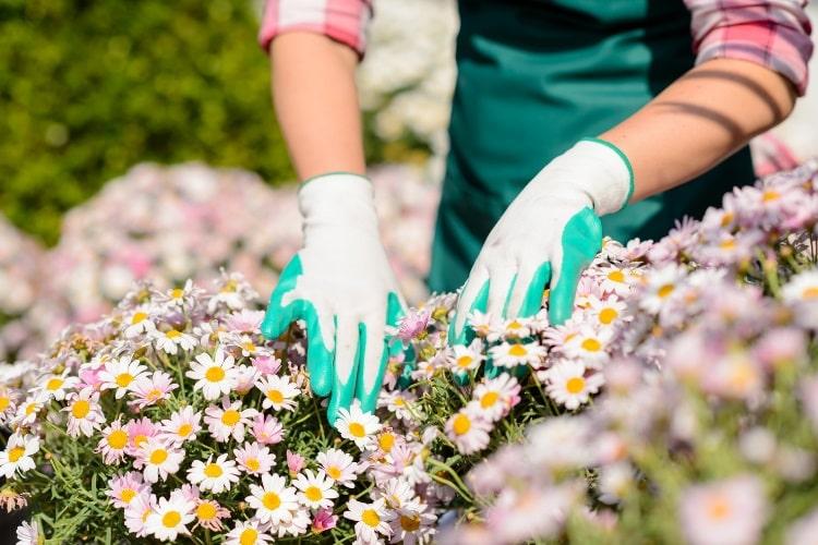 Gardening with gloves