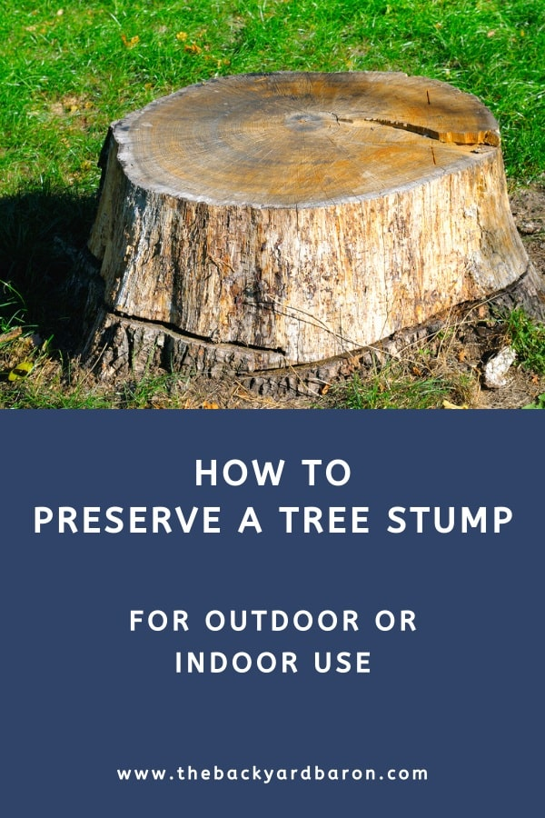 How to preserve a tree stump for outdoor or indoor use