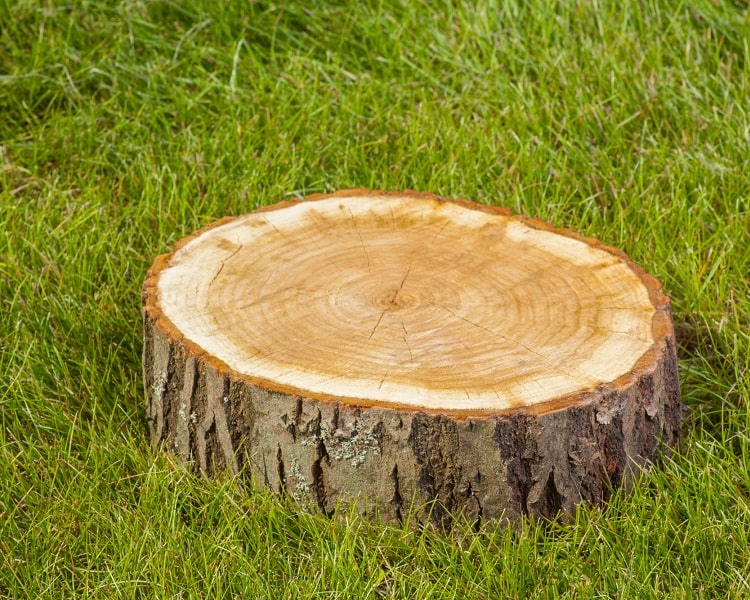 Preserved tree stump