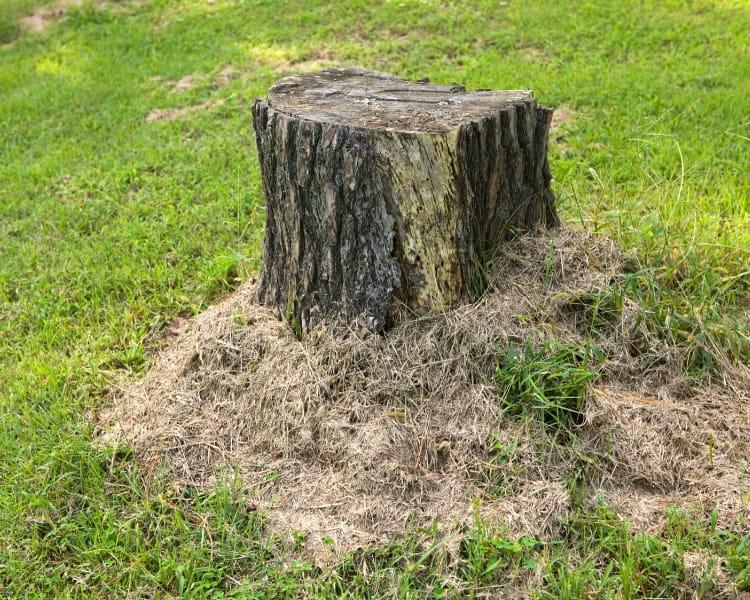 Tree stump in garden