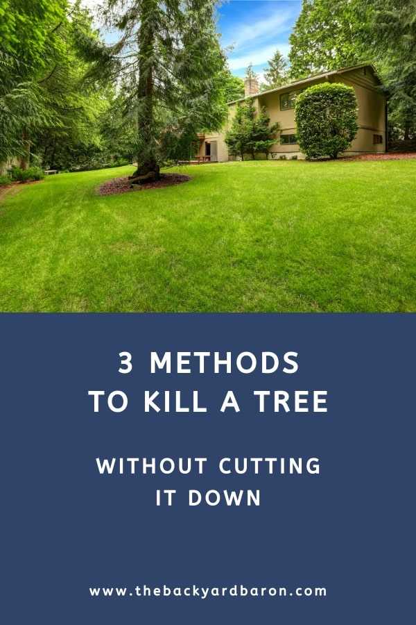 Three methods to kill a tree without cutting