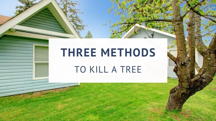 How to kill a tree without cutting it down (guide)