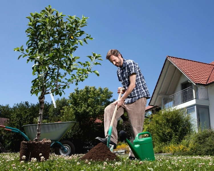 Planting a tree in the backyard