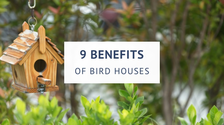 Birdhouse benefits for the environment