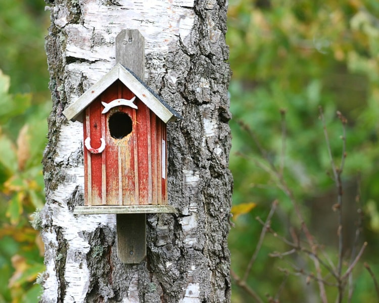 Birdhouse attached to tree